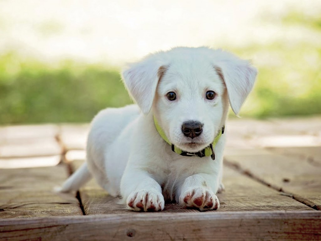 """5 ok, amiért nem éri meg a """"szereld magad kutyaházakkal"""" szenvedni"""