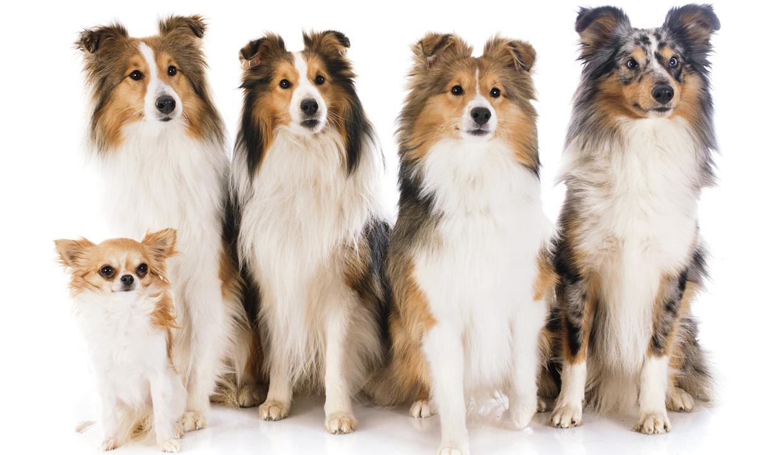 Mekkora a kutya mérete?
